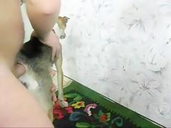 Perro obediente busca en el agujero del amo
