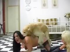 Hay perros para las dos