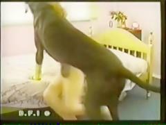 madura viciosa pajea a un caballo