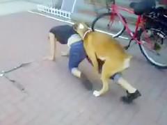 dildo canino