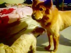 Compilation Dog Oral Part 1