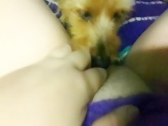 El animal lame mi coño