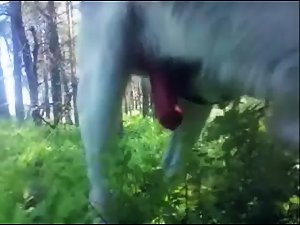 Doggiefuck at woods